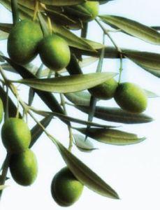 Olives_fanaraki
